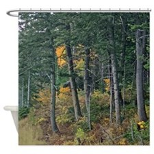 Autumn pines Shower Curtain