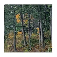 Autumn pines Tile Coaster