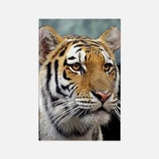 Majestic Tiger Rectangle Magnet