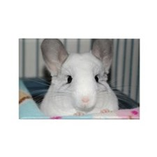Mosaic Chinchilla Rectangle Magnet