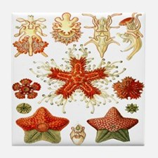 Ernst Haeckel's Asteridea Tile Coaster