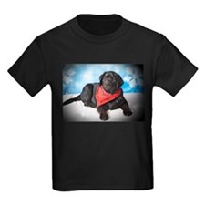 What's Up? Courious Black Lab T
