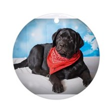 What's Up? Courious Black Lab Ornament (Round)