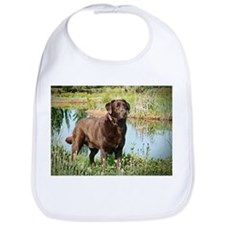 Chocolate Labrador Ready for the Hunt Bib