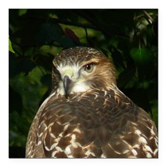 Red-tailed Hawk Square Car Magnet 3