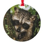 Baby Raccoon Round Ornament