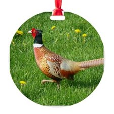 Ring-necked Pheasant Ornament