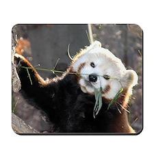 Tree Panda - Mousepad