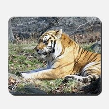 Tiger - Mousepad
