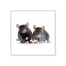 "2 rats Square Sticker 3"" x 3"""
