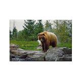 Bear Single