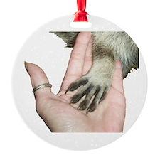 Cute Raccoon Ornament