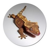 Crested gecko Round Car Magnets