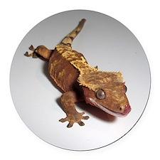 Crested Gecko Round Car Magnet