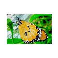 Golden Chalice Butterfly Rectangle Magnet