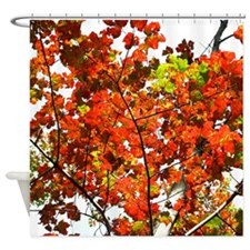 Autumn Birch Tree Shower Curtain