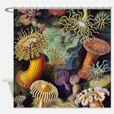 Ernst Haeckel Sea Anemones Shower Curtain