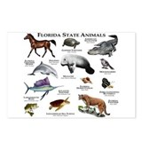 Florida animals Postcards
