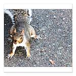 squirrel_nc.jpg Square Car Magnet 3