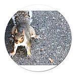 squirrel_nc.jpg Round Car Magnet