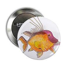 "Hogfish 2.25"" Button"