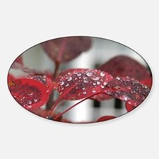 Dew on red leaves, Sticker (Oval)