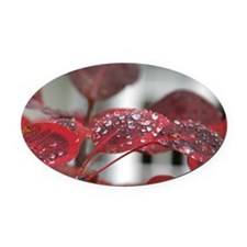 Dew on red leaves, Oval Car Magnet