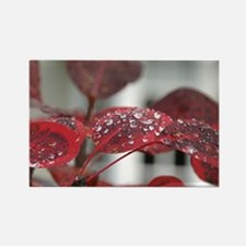 Dew on red leaves, Rectangle Magnet