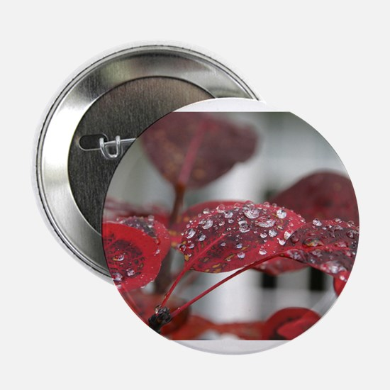 """Dew on red leaves, 2.25"""" Button"""