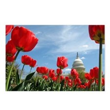 US Capitol Building Surrounded by Spring Flower Po