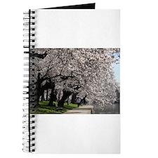 Cherry Blossom Peak Bloom Washington DC no-12.JPG