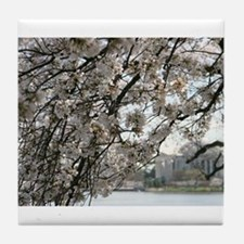 Peal bloom cherry blossom frames Thomas Jefferson