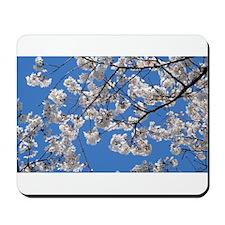 Cherry Blossom Peak Bloom Washington DC no-18.JPG