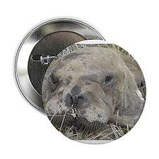 "Walrus Head 2.25"" Button"