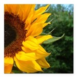 Edge of a sunflower for round ornament.png Square