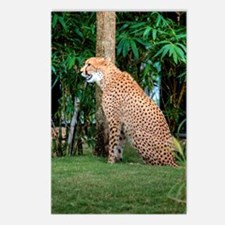 Tampa Cat Postcards (Package of 8)
