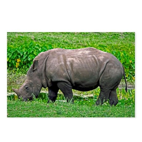 Grazing Rhino Postcards (Package of 8)