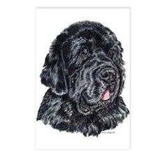 Newfoundland Dog Portrait Postcards(8)