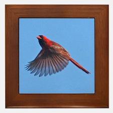 Flying Cardinal Framed Tile