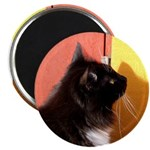 Black and white on red and yellow Magnet
