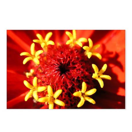 Flowers in flower Postcards (Package of 8)