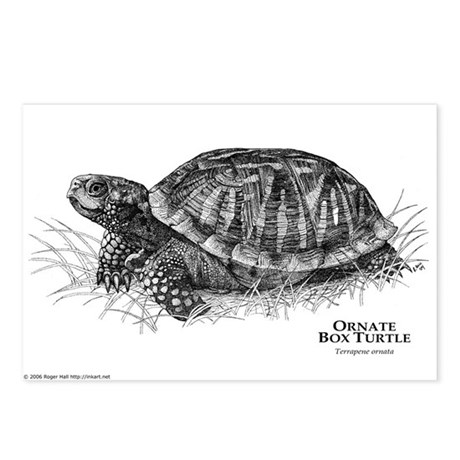 Ornate Box Turtle Postcards (Package of 8)