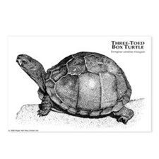 Three-Toed Box Turtle Postcards (Package of 8)