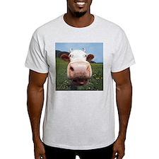 Cow Nose Ash Grey T-Shirt