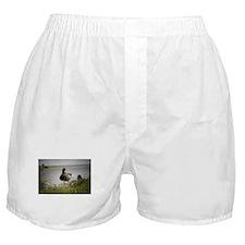 2 Ducks Boxer Shorts