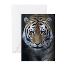 Tiger Portrait (Blank Cards Pk of 10)