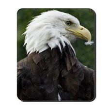 Bald-Eagle Mousepad