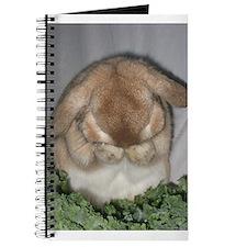 Bunny Grooming Journal