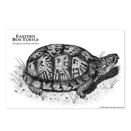 Eastern Box Turtle Postcards (Package of 8)