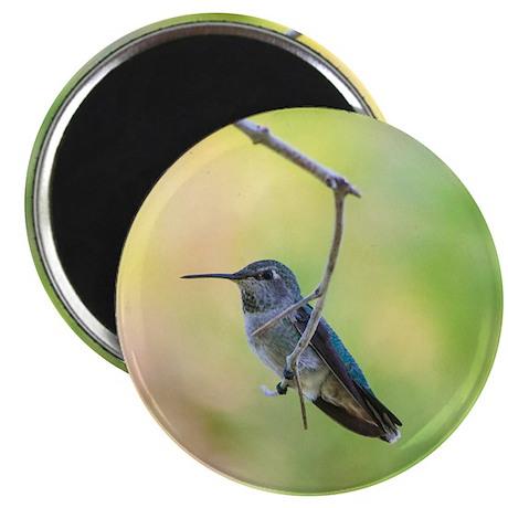 Hummingbird on green Magnet